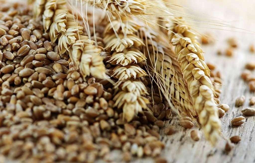 Россия приостанавливает экспорт зерна до 1 июля 2020 года