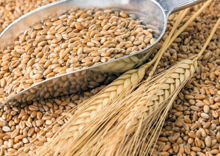 Власти начали тестировать «плавающую» пошлину на экспорт зерна