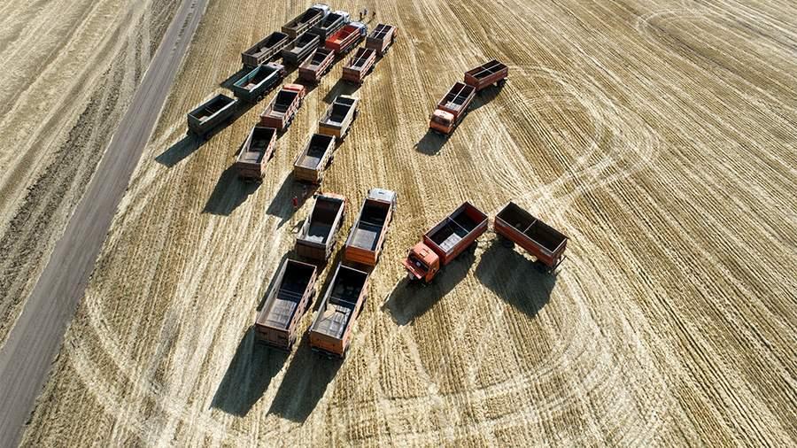 Пошлина на экспорт пшеницы из РФ с 30 июня составит $41,3 за тонну